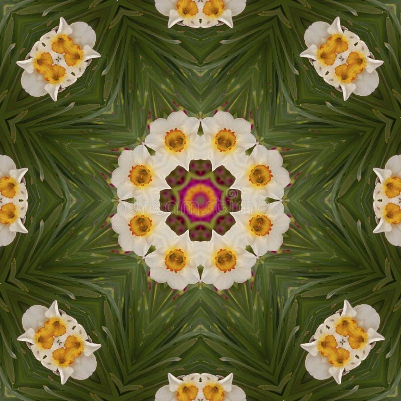Abstrakcjonistyczny kalejdoskop z daffodil kwitnie przy wiosną zdjęcia royalty free