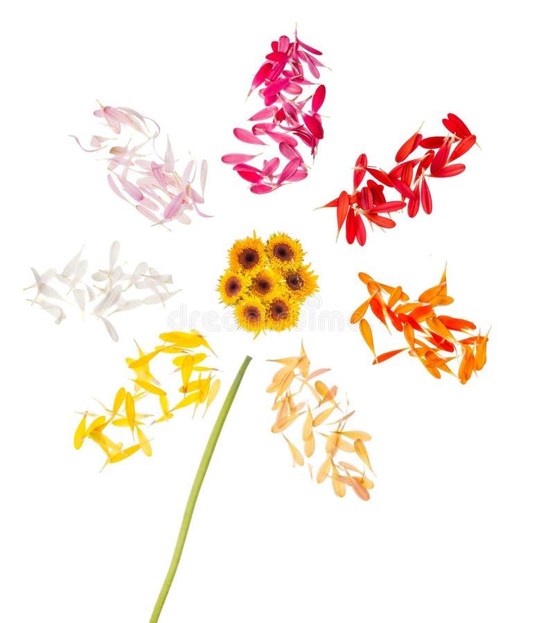 Abstrakcjonistyczny kwiat na białym tle fotografia royalty free