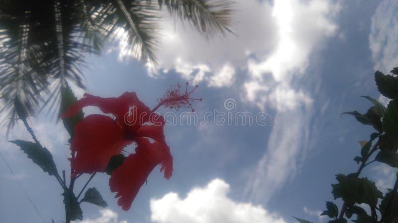 abstrakcjonistyczny kwiatu poślubnika ilustraci wektor fotografia royalty free