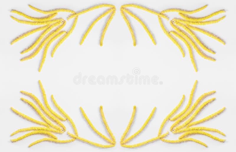 Abstrakcjonistyczny kwiecisty skład, rama kolor żółty kwitnie stokrotka kolczyki na szarym tle z przestrzenią dla teksta obraz stock