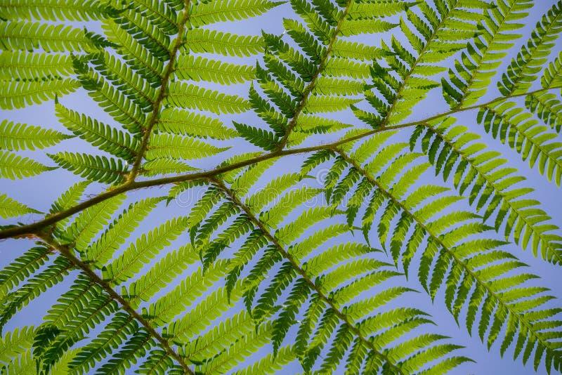 Abstrakcjonistyczny liścia wzór przeciw niebieskiemu niebu fotografia royalty free