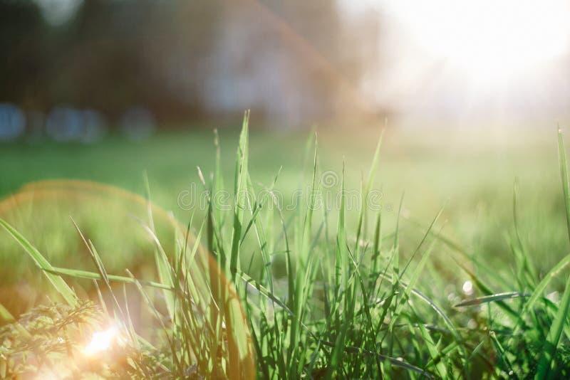 Abstrakcjonistyczny makro- wizerunek trawa krzak iluminujący ciepłym popołudnia światłem podczas wiosny Z piękną główną atrakcją fotografia royalty free