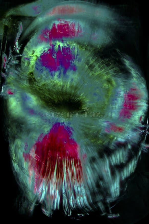 Abstrakcjonistyczny micrograph kwiat części drewnianego kobylaka roślina fotografia stock