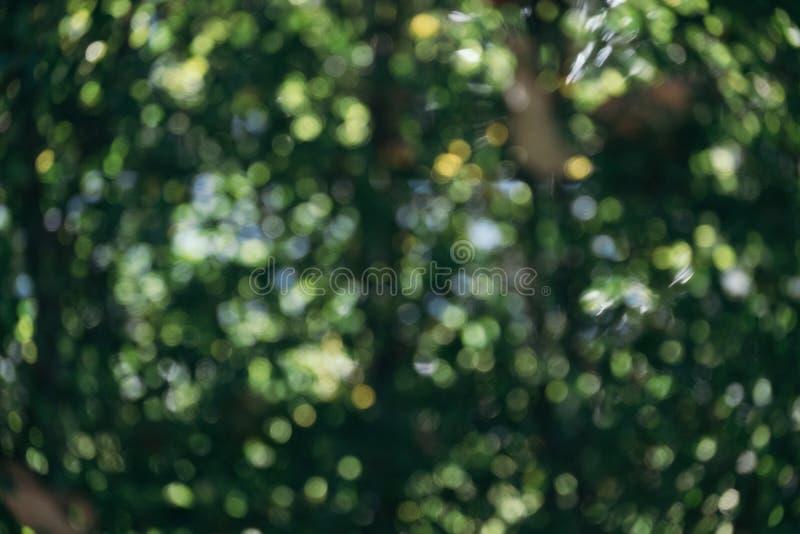 Abstrakcjonistyczny naturalny zielony bokeh od drzewnego tła natury defocu obrazy stock