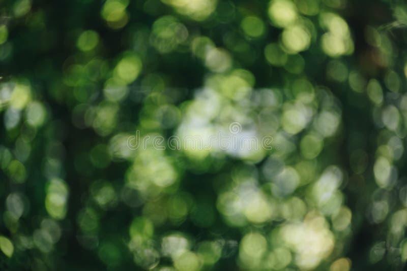 Abstrakcjonistyczny naturalny zielony bokeh od drzewnego tła natury defocu zdjęcia royalty free