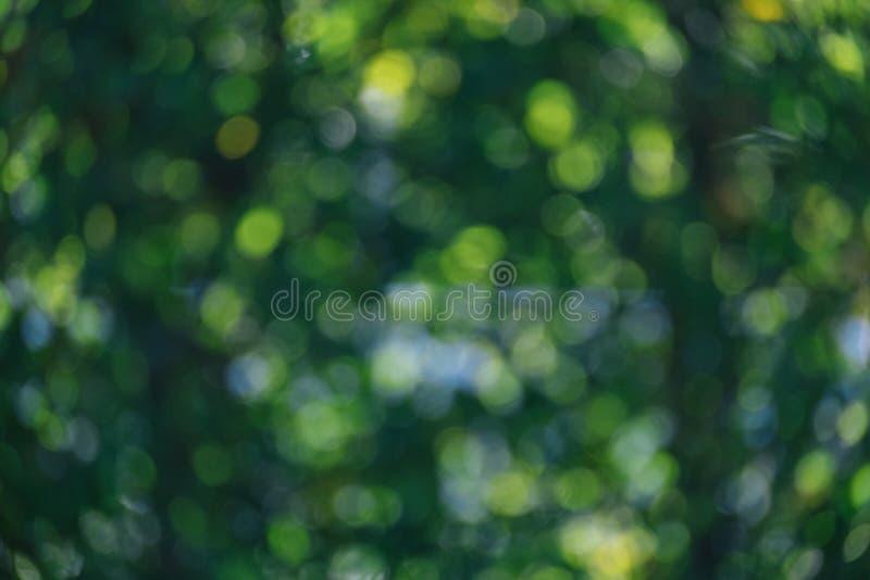 Abstrakcjonistyczny naturalny zielony bokeh od drzewnego tła natury defocu obraz stock