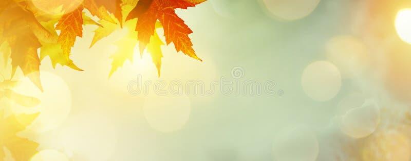 Abstrakcjonistyczny natury jesieni tło z żółtymi liśćmi fotografia stock