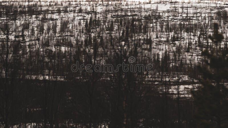 Abstrakcjonistyczny ?nie?ny lasu krajobraz Ciemny las pod śniegiem t?o p?atk?w ?niegu bia?y niebieska zima obrazy royalty free