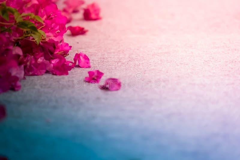 Abstrakcjonistyczny Piękny kwiat na grunge stole zdjęcia stock