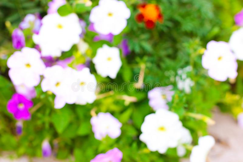 abstrakcjonistyczny plama wizerunek lato rośliny obraz stock
