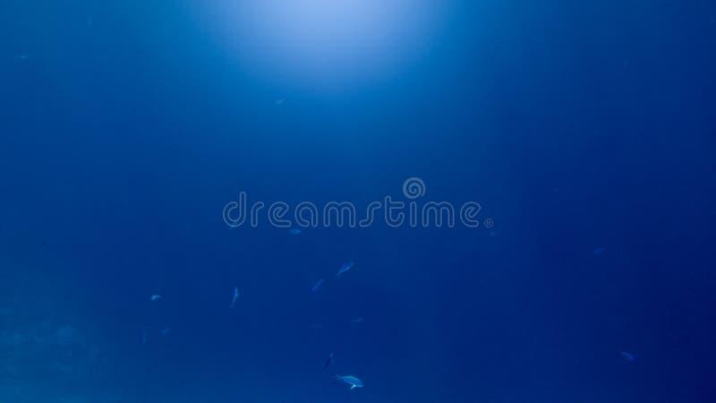 Abstrakcjonistyczny podwodny wizerunek ryby szkoły dopłynięcie w głębokim oceanie Słońce lekcy promienie błyszczy przez wody powi obrazy stock