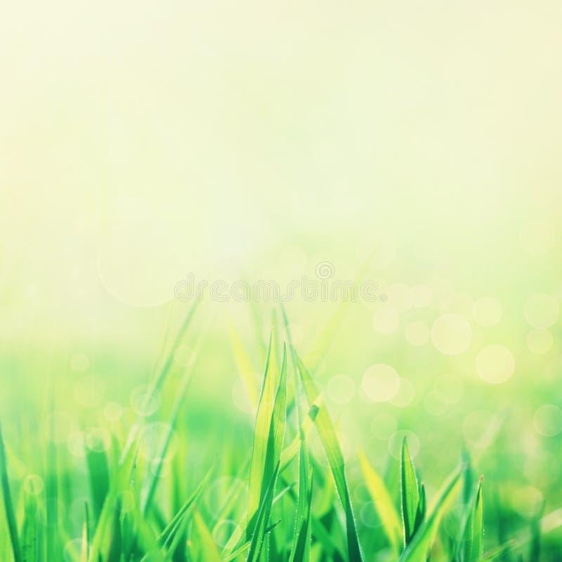 abstrakcjonistyczny tła natury wiosna lato zdjęcie royalty free