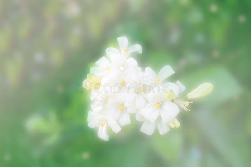 Abstrakcjonistyczny tło biały kwiat zdjęcie royalty free