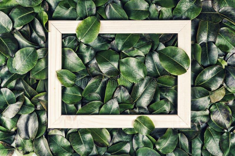 Abstrakcjonistyczny tło, Kreatywnie układ, zieleń opuszcza, biel rama Mieszkanie nieatutowy pojęcia odosobniony natury biel zdjęcia royalty free