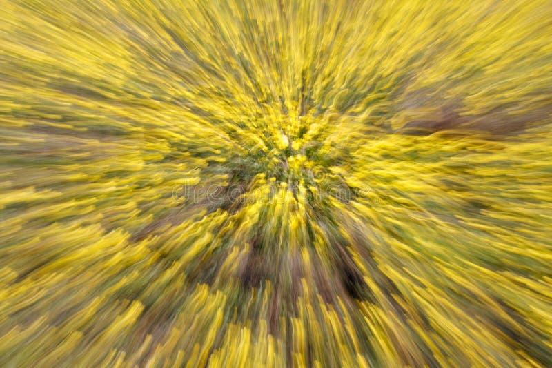 Abstrakcjonistyczny tło natura Strzelać przy wolną żaluzi prędkością gdy zmieniający obiektyw ogniskową długość obrazy stock
