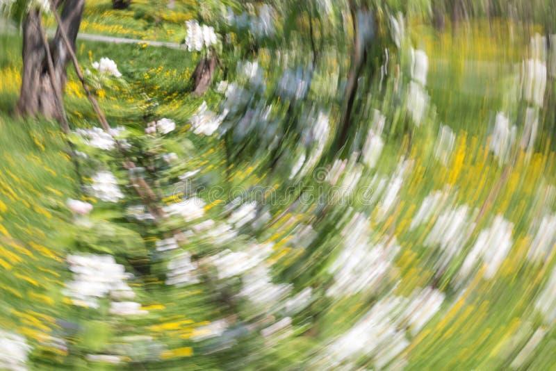 Abstrakcjonistyczny tło od kwitnie drzew zielony ulistnienie ma degradację na długiej wytrzymałości Rysunek fotografia royalty free