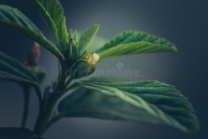 Abstrakcjonistyczny tło okulizowanie kwiat obrazy royalty free