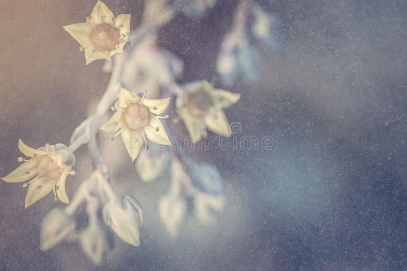 Abstrakcjonistyczny tło pustyni róży kwiat zdjęcia royalty free