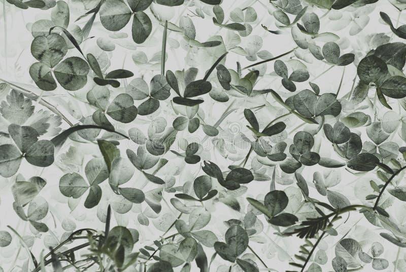 Abstrakcjonistyczny tło z koniczynowym ulistnieniem zdjęcie stock