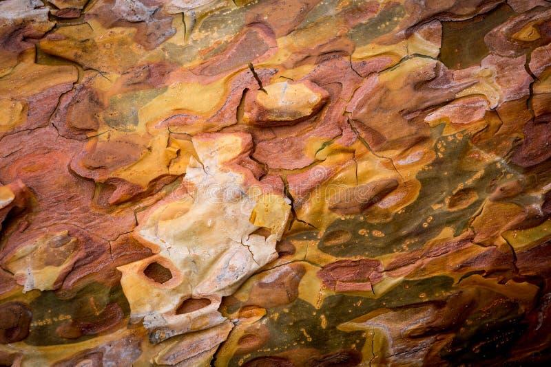 Abstrakcjonistyczny tło z sosnowym cortex zdjęcia stock