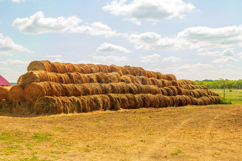 abstrakcjonistyczny t?o z traw? i niebieskim niebem, pi?knej fotografii cyfrowy obrazek fotografia stock