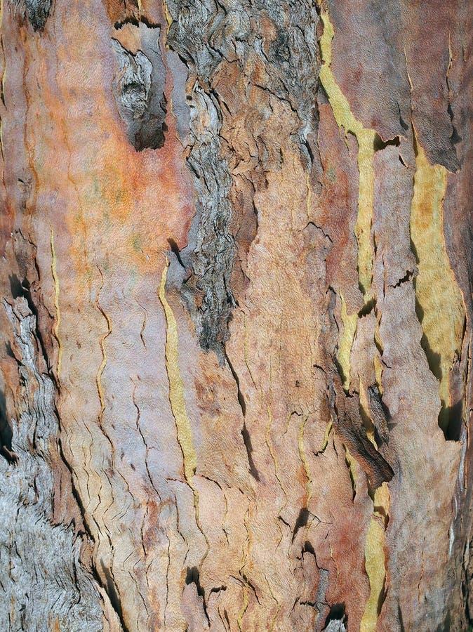 Abstrakcjonistyczny Textured Wielo- Coloured barkentyna wzór zdjęcia stock