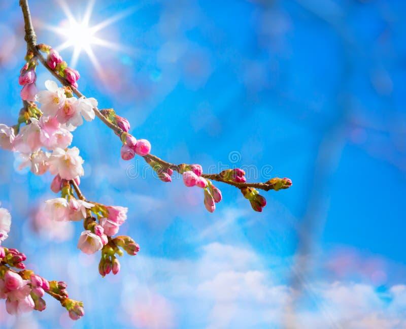 Abstrakcjonistyczny wiosny tło z menchii okwitnięciem zdjęcie stock