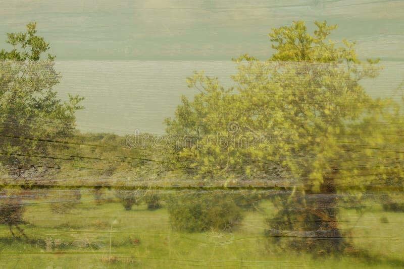 abstrakcjonistyczny wizerunek drzewa Dwoistego ujawnienia skutek zdjęcia royalty free