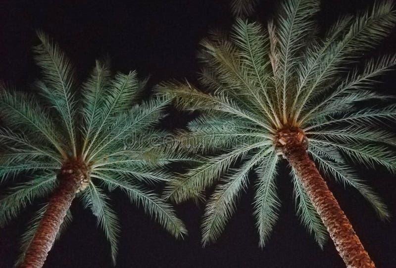 Abstrakcjonistyczny wizerunek drzewka palmowe iluminujący w odbijającym świetle zdjęcie royalty free