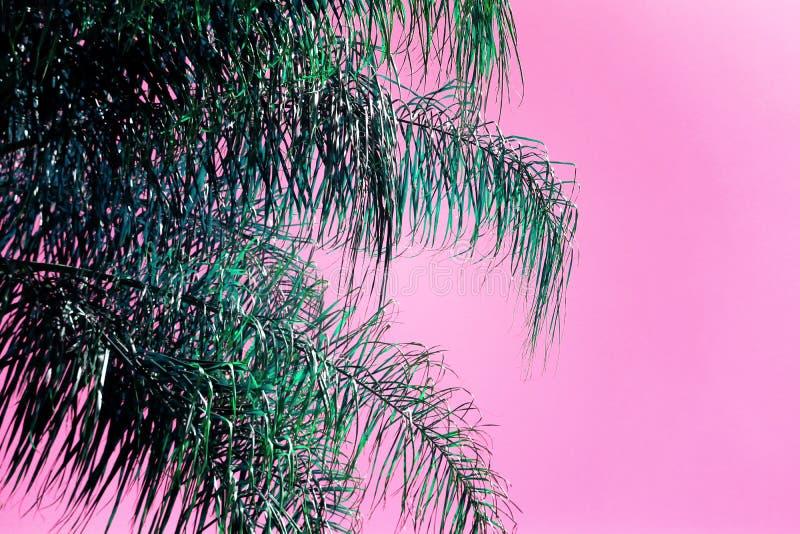 Abstrakcjonistyczny wizerunek drzewko palmowe z retro pastelowymi brzmieniami fotografia stock