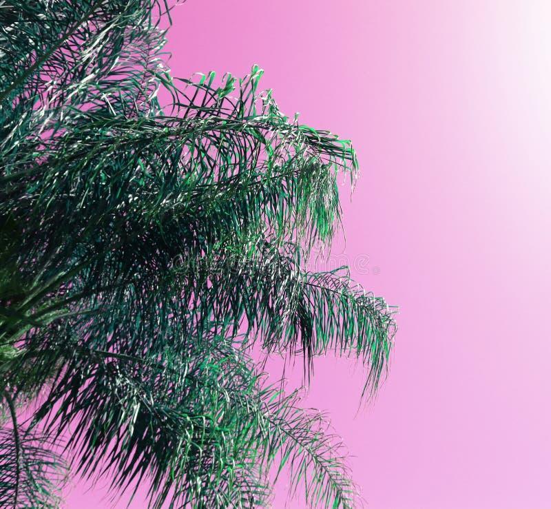 Abstrakcjonistyczny wizerunek drzewko palmowe z retro pastelowymi brzmieniami obrazy stock