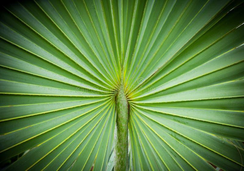 Abstrakcjonistyczny wizerunek Zielona palma opuszcza w naturze zdjęcia royalty free