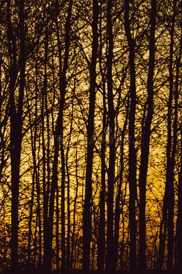 Abstrakcjonistyczny złoty lasowy tekstury tło gałąź sylwetka obraz royalty free