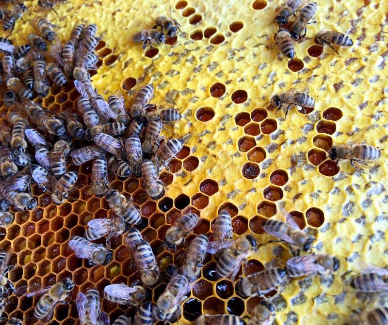Abstrakcyjna struktura sześciokątna to plasterek miodu z ula pszczół wypełniony złotym miodem obrazy royalty free