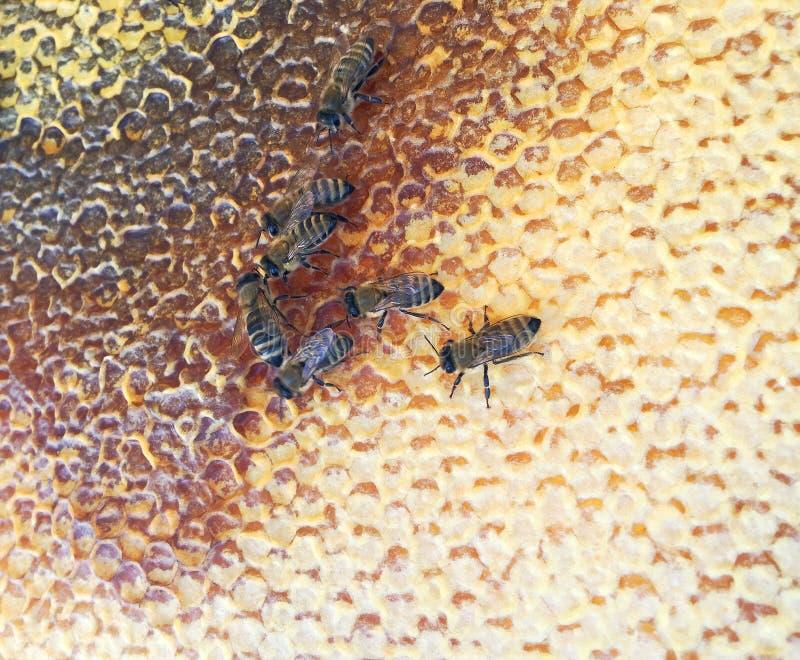 Abstrakcyjna struktura sześciokątna to plasterek miodu z ula pszczół wypełniony złotym miodem obraz stock