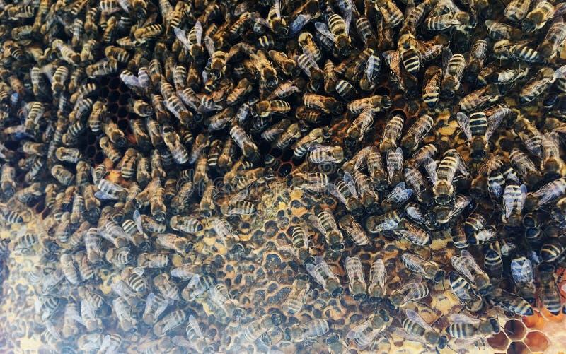 Abstrakcyjna struktura sześciokątna to plasterek miodu z ula pszczół wypełniony złotym miodem zdjęcie royalty free
