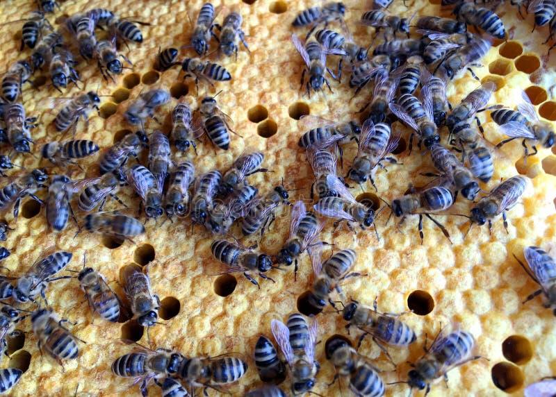 Abstrakcyjna struktura sześciokątna to plasterek miodu z ula pszczół wypełniony złotym miodem fotografia stock