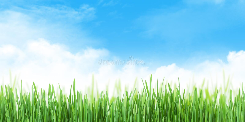 Abstrakcyjne letnie pole trawy i szerokie niebo obraz stock