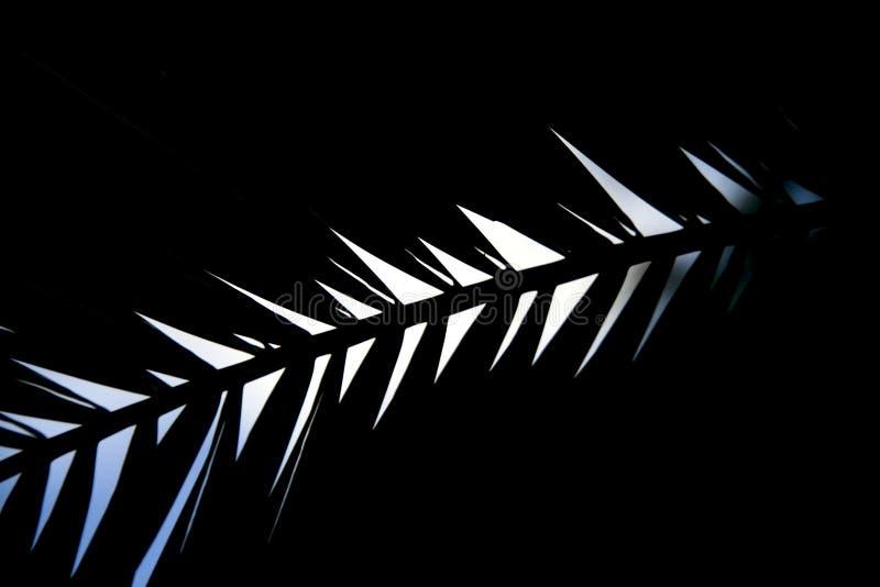abstrakcyjny tło Liść w kontrasta świetle obrazy stock