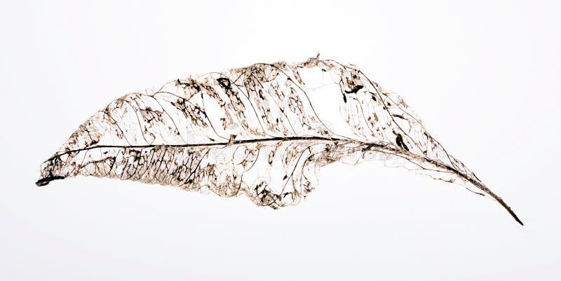 abstraktów liść zdjęcie stock