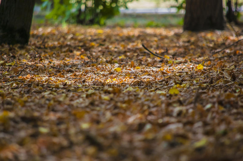 Abstraktów liście w jesieni stosownej jako tło zdjęcia stock