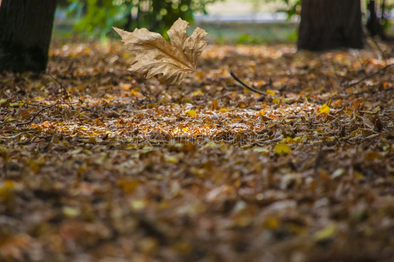 Abstraktów liście w jesieni stosownej jako tło obraz stock