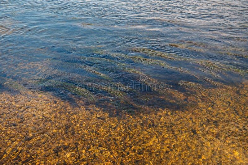 Abstrakt bakgrund av alger och stenar i vattnet p? en solig h?stdag fotografering för bildbyråer