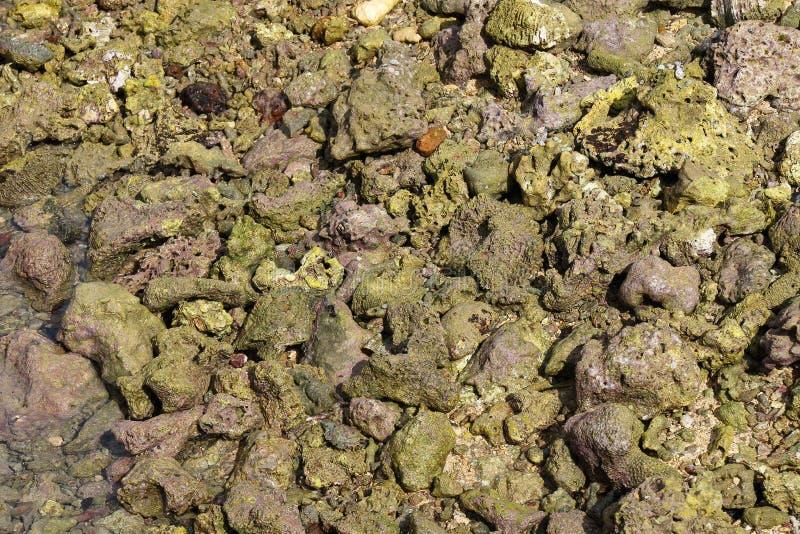 Abstrakt bakgrund av död korall i en tidvattens- pöl arkivfoto