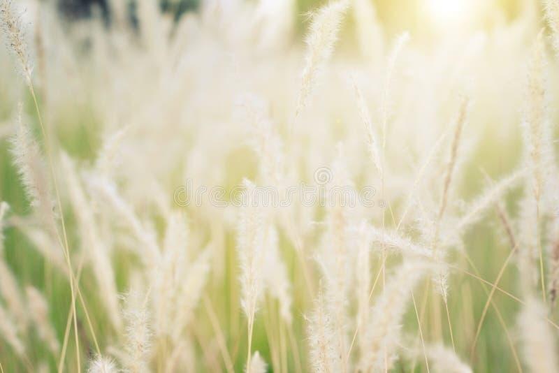 Abstrakt bakgrund av den mjuka och suddiga grässlätten, tonat varmt för tappning royaltyfria foton