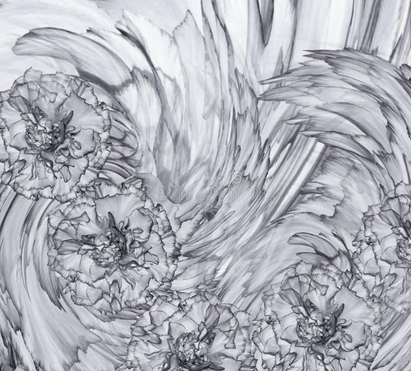 Abstrakt bakgrund av engrå färger kryddnejlika Blom- bakgrund med gråa blommor av nejlikor arkivbild
