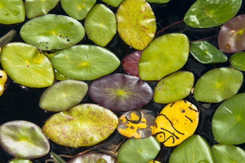 Abstrakt bakgrund Lily Pads i sjön, naturfärger arkivbild