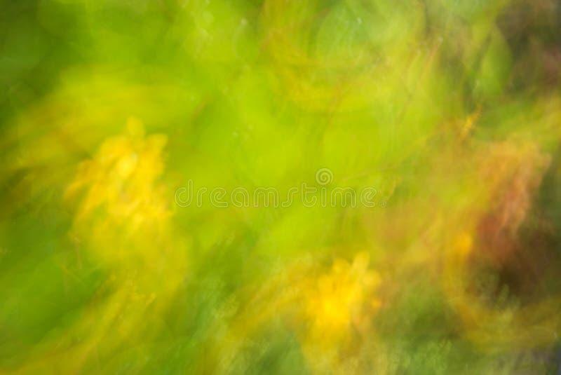 abstrakt bakgrund St Johns Wort som göras suddig med avsiktlig kamerarörelse arkivfoto