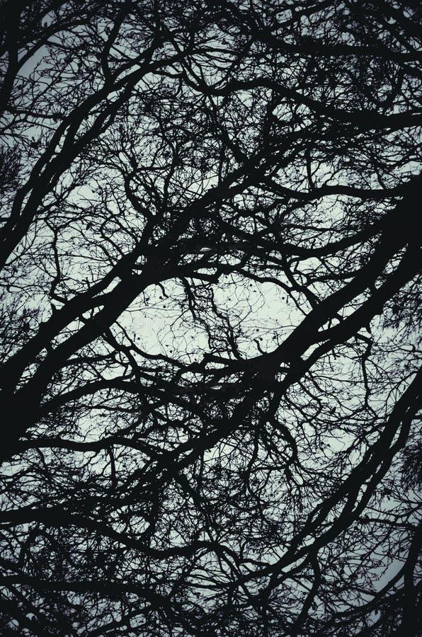 abstrakt bakgrundsfilialer arkivfoto