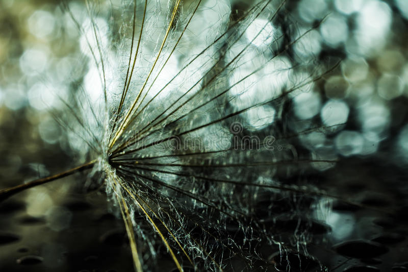 abstrakt bakgrundsmaskros grunt djupfält arkivfoto